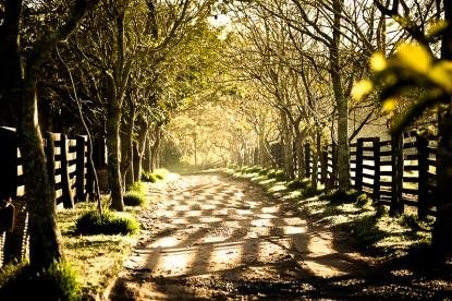 Find new Roads - Trailblazer e S10